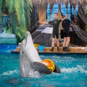 Дельфинарии, океанариумы Лобны