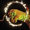 Цирки в Лобне
