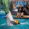 Дельфинарии, океанариумы в Лобне